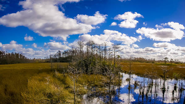 Florida Art Print featuring the photograph Grassy Waters 3 by Nancy L Marshall