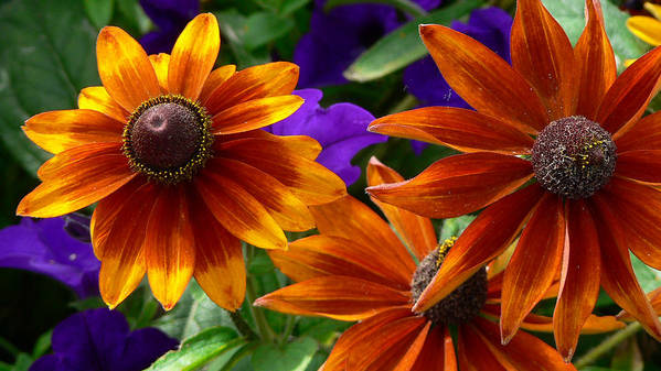 Flowers Art Print featuring the photograph Layers Of Color by Larry Keahey