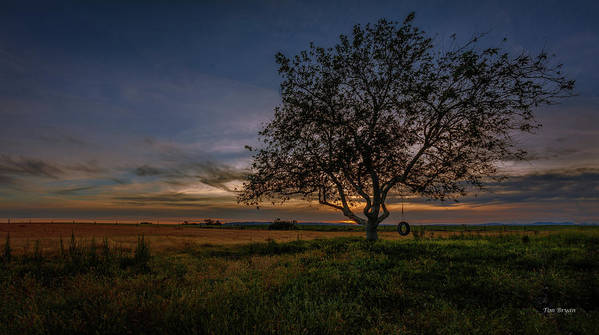Paso Robles Art Print featuring the photograph Lone Sycamore by Tim Bryan