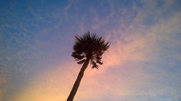 Palm At Dusk Art Print featuring the photograph Palm At Dusk by Charles J Pfohl