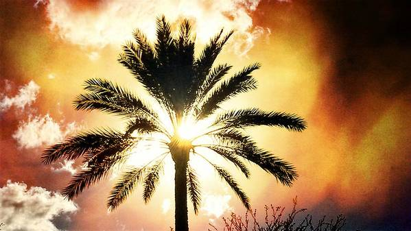Art Print featuring the digital art Palm Tree In The Sun #2 by Alfred Blaho