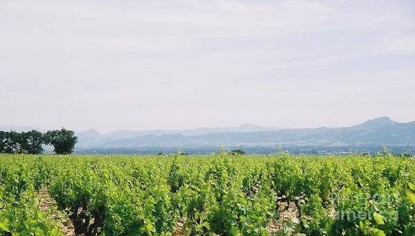France Art Print featuring the photograph Provence Spring Vineyard by Nadine Rippelmeyer