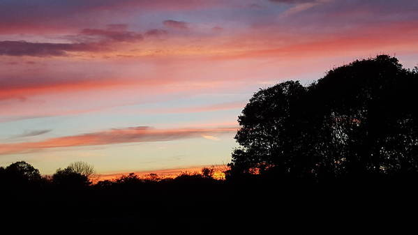 Silhouette Of Large And Small Trees With Foliage Art Print featuring the photograph Red Sky At Night by Harriet Harding