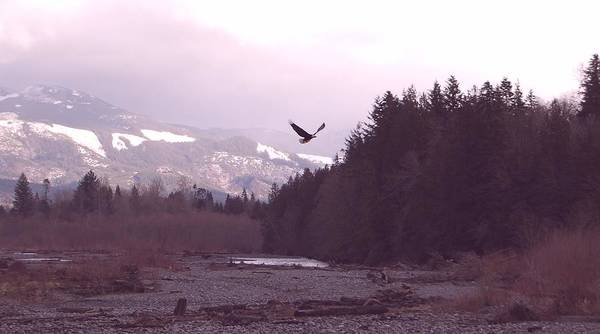 Eagle Art Print featuring the photograph The Freedom To Fly by J D Banks