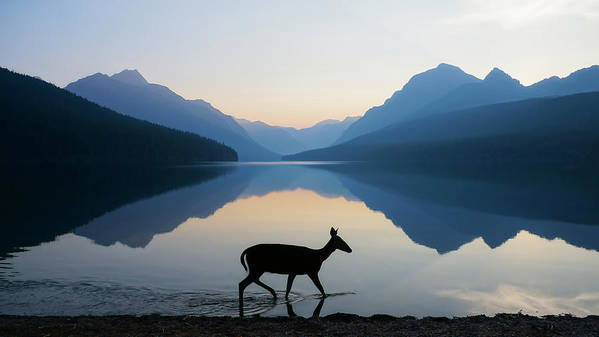 Glacier National Park Art Print featuring the photograph The Grace Of Wild Things by Dustin LeFevre