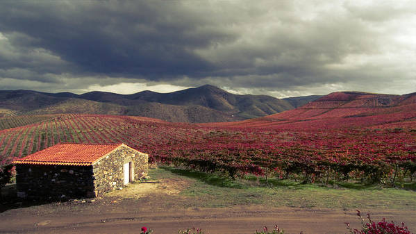Landscape Art Print featuring the photograph Vineyard House by Joao Almeida