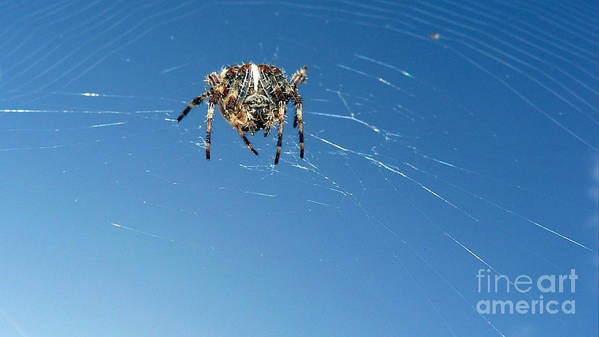 Spider Art Print featuring the photograph Waiting by Larry Keahey
