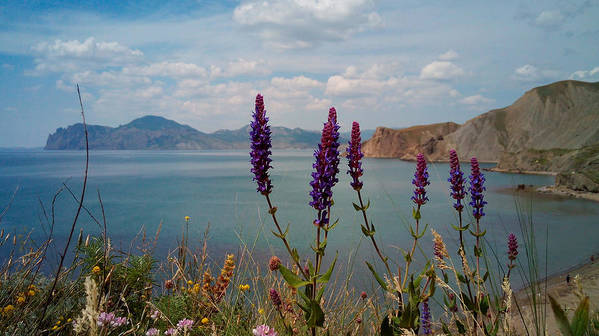 Wild Art Print featuring the photograph Wild Lupines by Yuri Hope