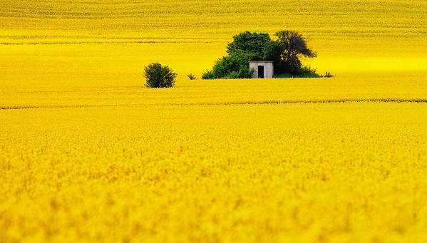 Field Print featuring the photograph Yellow by Evgeni Dinev
