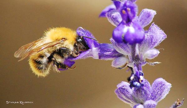 Macro Photography Art Print featuring the photograph Humming Bee by Stwayne Keubrick