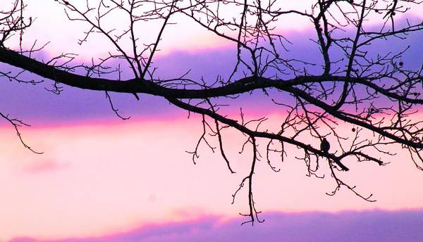 Colorful Sunset Art Print featuring the photograph Pink And Purple Sunset by Robin Vargo