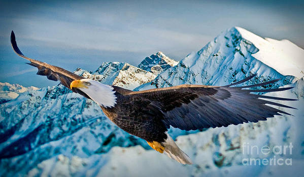 Eagle Art Print featuring the photograph Soaring Bald Eagle by Gary Keesler