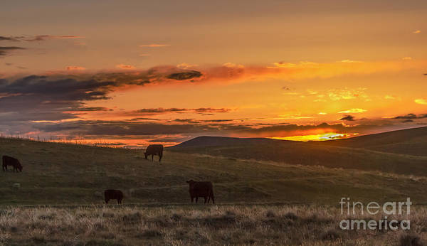 Range Art Print featuring the photograph Sunset On Open Range by Robert Bales