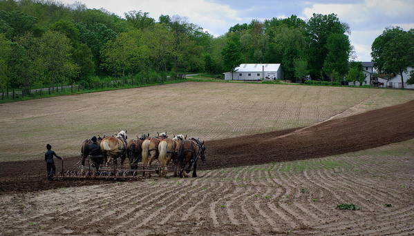 Amish Art Print featuring the photograph Teamwork by Linda Mishler
