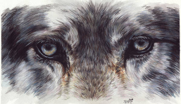 Wolf Art Print featuring the painting Eye-catching Wolf by Barbara Keith