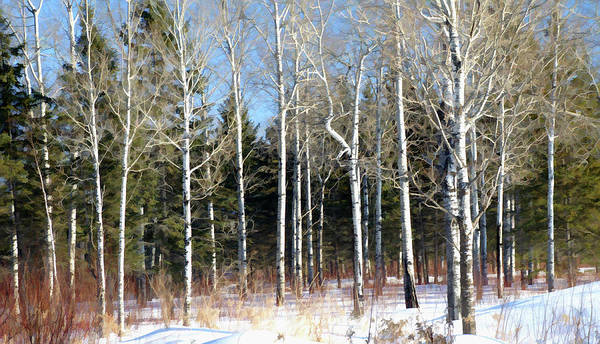February Forest Art Print featuring the photograph February Bliss by Bill Morgenstern