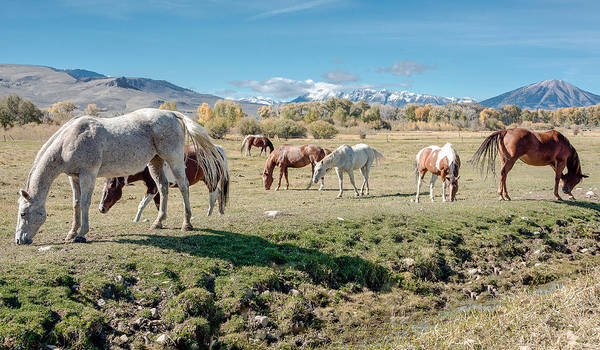 Scenic Pictures Art Print featuring the photograph Horse Pasture by John Bartelt