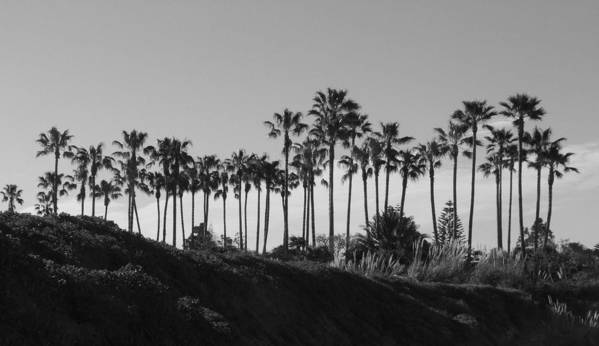Landscapes Art Print featuring the photograph Palms by Shari Chavira