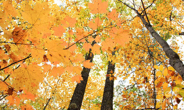 Fall In Nh Art Print featuring the photograph Autumn Days by Michael Mooney