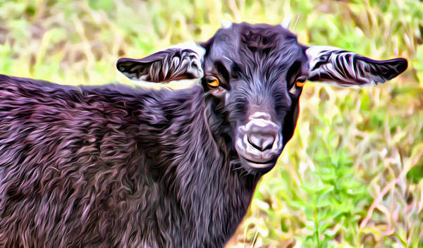 Baby Goat Art Print featuring the photograph Baby Billy by Alice Gipson