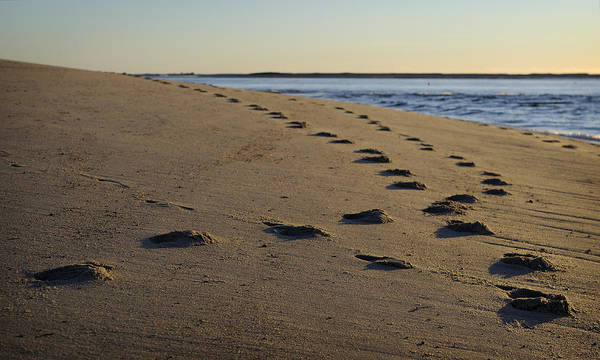 Beach Art Print featuring the photograph Follow Your Path by Luke Moore