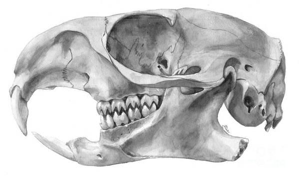 Gopher Art Print featuring the painting Gopher Skull by Jenn Tse