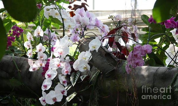 Orchid Art Print featuring the photograph Orchid Branch by Christiane Schulze Art And Photography