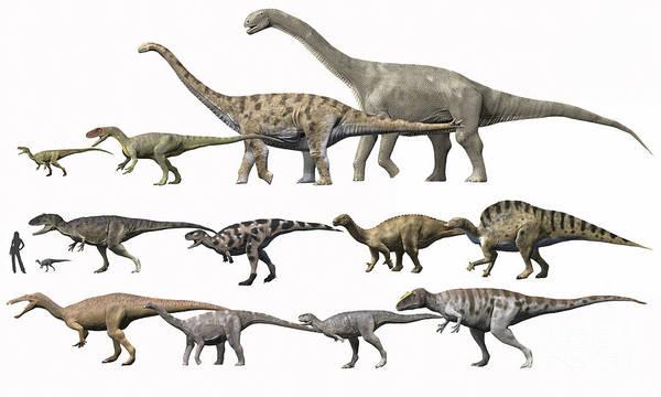 Comparison Art Print featuring the digital art Prehistoric Era Dinosaurs Of Niger by Nobumichi Tamura