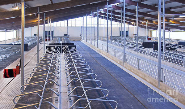 Agricultural Art Print featuring the photograph Row Of Cattle Cubicles by Jaak Nilson
