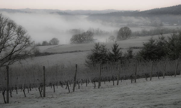Vineyard Art Print featuring the photograph Winter Vineyard by Jean Noren