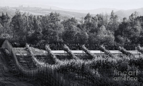 Black And White Art Print featuring the photograph Black And White Vineyard Sunrise by Sherry Curry