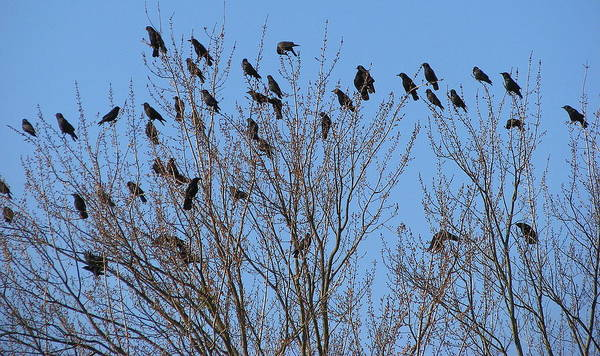 Bird Art Print featuring the photograph Birds In The Trees by Kathy Roncarati