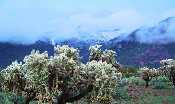 Nature Art Print featuring the photograph Cholla Cactus And Superstition Mountains by Richard Jenkins