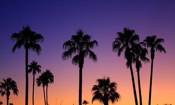Sunsets Art Print featuring the photograph Colorful Tropical Palm Tree Sunset by James BO Insogna