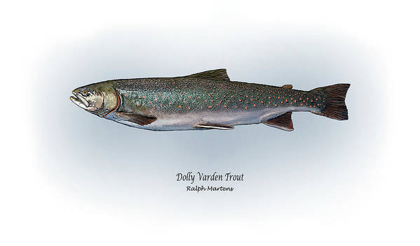 Dolly Varden Trout Art Print featuring the painting Dolly Varden Trout by Ralph Martens