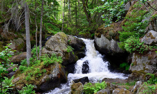 Water Art Print featuring the photograph Forest Creek by Gunnar Lundquist