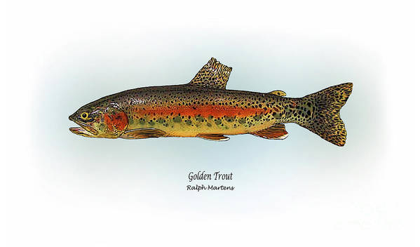 Golden Trout Art Print featuring the painting Golden Trout by Ralph Martens