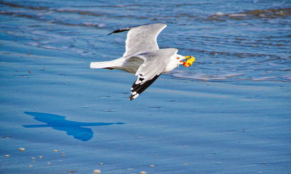 Seagull Art Print featuring the photograph I Will Not Share by Linda Brown