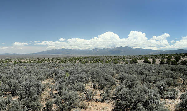 Sage Art Print featuring the photograph New Mexico Landscape 3 by John Wijsman