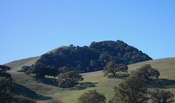 Oaks Art Print featuring the photograph Oakscape by Jean Booth