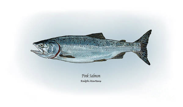 Pink Salmon Art Print featuring the painting Pink Salmon by Ralph Martens