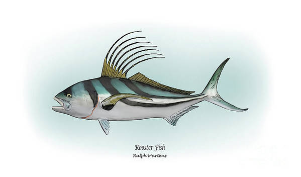 Roosterfish Art Print featuring the painting Roosterfish by Ralph Martens