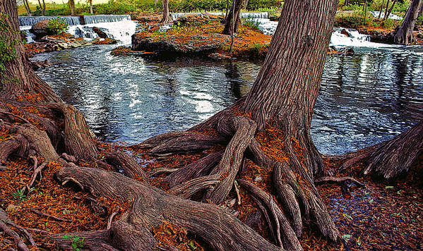 Roots Art Print featuring the painting Roots On The River by Stephen Anderson