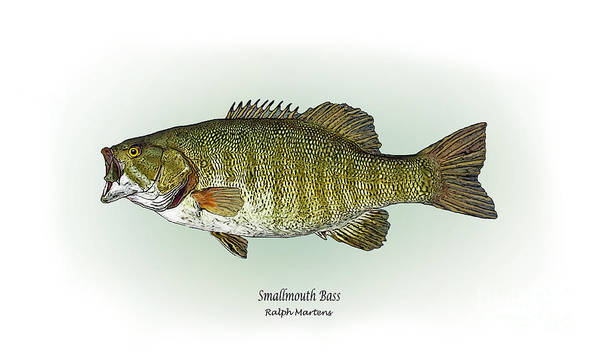 Smallmouth Bass Art Print featuring the painting Smallmouth Bass by Ralph Martens