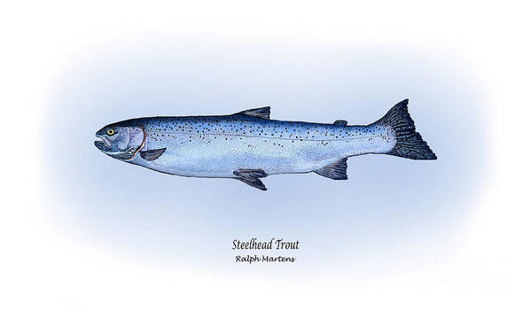 Steelhead Trout Art Print featuring the painting Steelhead Trout by Ralph Martens