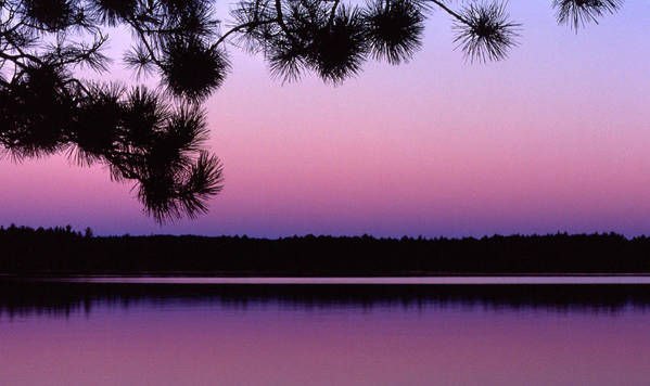 Sunset Art Print featuring the photograph Sunset And Pine 2 by Lyle Crump