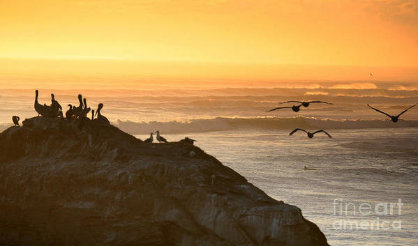Surf Art Print featuring the photograph Sunset Pelicans IIi by Chuck Kuhn