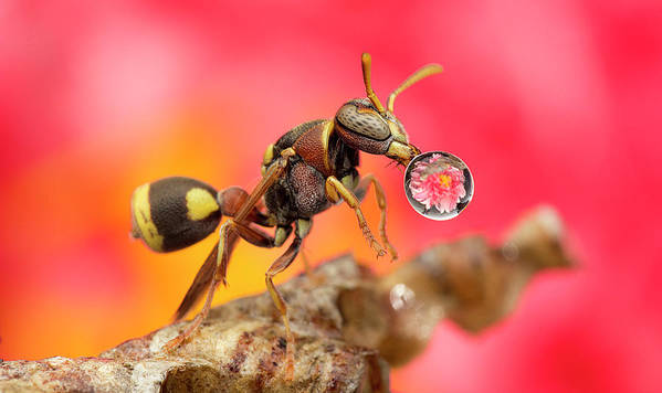 Macro Art Print featuring the photograph Wasp Blowig Bubble 160507e by Lim Choo How
