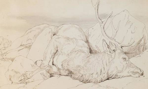 C19th Print featuring the drawing A Dead Stag by Sir Edwin Landseer