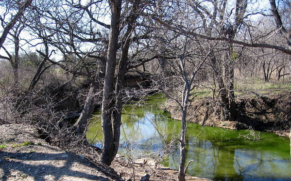 Creek Art Print featuring the photograph Creek In North Texas by Amy Hosp